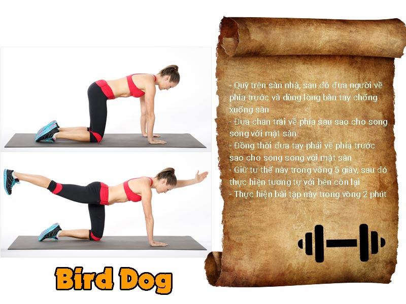 bird-bog